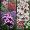 Cottage Garden Collection - 6 x  Easy to Grow Plants