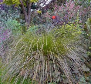 Ornamental Grass - 12 evergreen plant collection