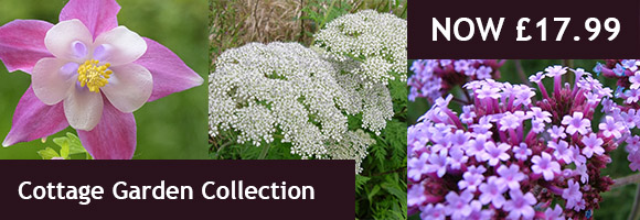 Buy Cottage Garden Collection
