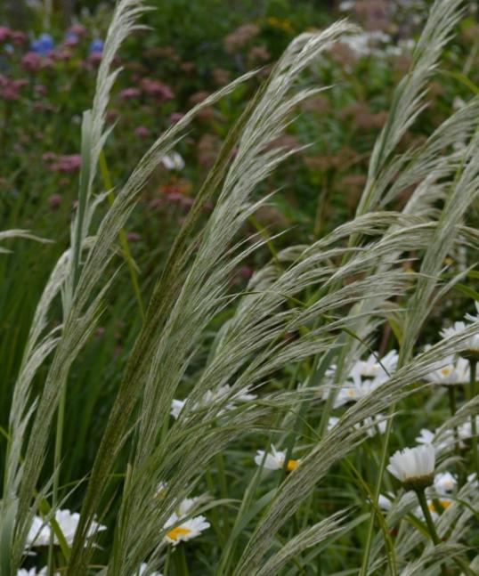 Ornamental grass flowering 12 plant collection plants for Tall grass plants